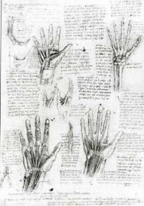 image of anatomical drawings of hands from Leonardo da Vinci's notebooks